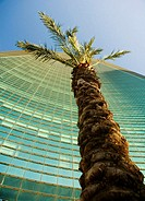 Low angle view of a palm tree in front of a skyscraper, Miami, Florida, USA