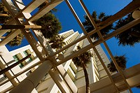 Low angle view of palm trees in front a building, Miami, Florida, USA