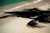 High angle view of the shadow of a palm tree on the beach