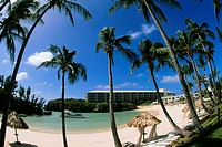 Low angle view of palm trees on a beach, Somesta hotel, Bermuda