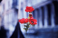 Close-up of a red flowers in front of a building, Italy