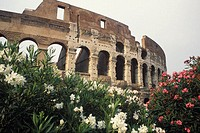 Low angle view of an amphitheater, Rome, Italy