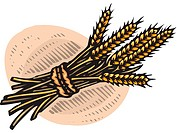 An illustration of a bundle of wheat