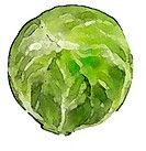 A closeup of a shiny green cabbage