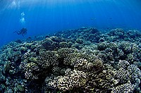 Hard corals dominate the shallows of the South Pass of Fakarava Atoll, French Polynesia.