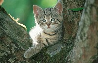 Domestic, cat, kitten, on, tree