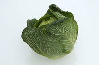 Savoy, Cabbage, Brassica, oleracea, var., sabauda
