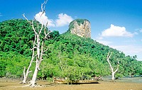 Trees on the hill with a boat near river in Thailand, Asia