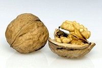 Walnut Juglans regia Germany Europe