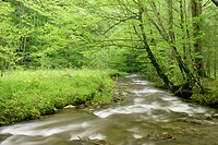 An unnamed creek flows beneath a canopy of green in the Greenbrier area of Great Smoky Mountains National Park, Tennessee, USA