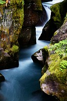 A glacier fed stream rushes through the moss covered boulders of Avalanche Gorge, Glacier National Park, Montana, USA