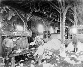 Cotton gins  Foreman and labourers operating cotton gins in a factory in Dahomey, Mississippi, USA, circa 1890  The cotton gin ´gin´ being short for ´...