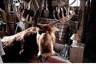 Film ´Es ist ein Elch entsprungen´, BRD 2005, Regie: Ben Verbong, Filmszene, Familienfilm, Abenteuer, Geweih, Tier, Holzhütte, Hütte, Schuppen,