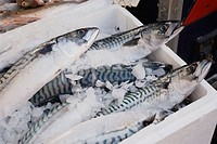 UK, London. Portobello Road. Fishmonger Stall