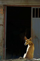 Dog in front of country house. Spain