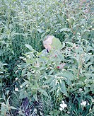 Meadow, plants, boy, hides, people, child, 8-10 years, archly, childhood, blond, leisure time, plays, game, hide-and-seek, camouflage, coverage, outsi...