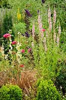 Lythrum salicaria ´Blush´; Carex flagellifera; Papaver orientale cv.; Buxus sempervirens. Titus, Ferndale. Washington. USA