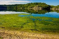 Algal blooms along shore of Simon Lake. Naughton. Ontario