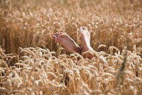 Grain-field, women-feet, people, woman, feet, high-stretches, barefoot, summers, outside, sunny, enjoys, leisure time, relaxen, relaxation, rests, nat...