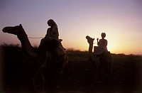 Sudan, Gheddaref, camel-riders, silhouette, sunset, Africa, North-Africa, people, Bedouins, nomads, rides riders, camels, animals, in two, evening sun...