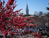 Japan, Tokyo, city-opinion, Shinjuku Gyoen park, cherry tree-bloom, visitors, Asia, Eastern Asia, capital, park, people, Asians, recuperation, Naherho...