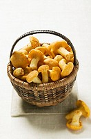 Chanterelles in basket
