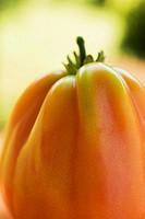 A tomato close-up
