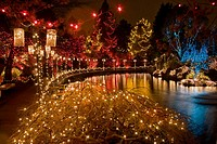 Holiday lighting in Japanese Maple (fgnd) and other trees around Livingstone Lake [Acer palmatum]. VanDusen, Vancouver, BC.