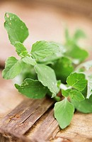 Wild mint on wooden background in open air 1