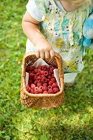 Child holding a basket of fresh raspberries