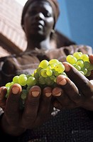 Woman holding Chardonnay grapes in her hands, S  Africa