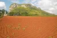 Farm field with red soil with limestone mountains in the Valle de Viñale, in central Cuba