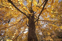 Tree in Autumn