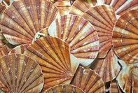 Sea shell patterns at the Shell Factory