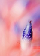 Bromeliad flower, extreme close-up