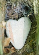 Heart shaped stone in webcovered nook