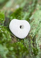 Pebble with hole on mossy wood, extreme close-up