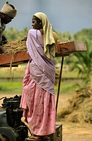 Threshing, India