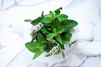 Flowering Mint in a tea pot