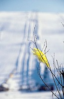 Closeup view of yellow feather on leafless plant