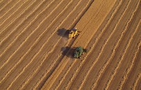 Combine harvesters in wheat field, aerial view