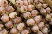 Saturday market garlic being sold, close-up