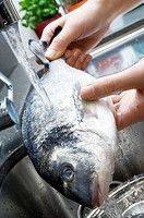 Close-up of a person's hand washing fish in the kitchen sink