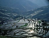 Aerial view of rice terraces, China
