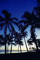 Silhouette of palm tree on the beach, Viti Levu, Fiji