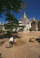 High angle view of a mature man picking spice with a temple in the background, Ananda Temple, Bagan, Myanmar