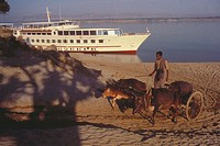 Man riding on an ox cart with a cruise ship in behind, Bagan, Myanmar