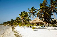 BELIZE   Ambergris Caye   Palm trees and sandy beach along coastline, thatched umbrellas, windy weather