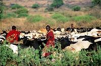 africa, kenya, maasailand, chulu hills, kisongo