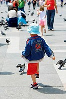 Rear view of a boy walking towards pigeons, Venice, Veneto, Italy